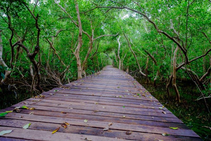 Δάσος μαγγροβίων με την ξύλινα γέφυρα διάβασης πεζών και τα φύλλα του δέντρου Phetchaburi, Ταϊλάνδη στοκ φωτογραφία με δικαίωμα ελεύθερης χρήσης