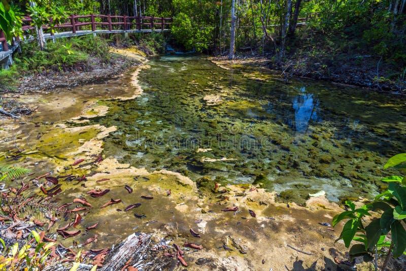 Δάσος μαγγροβίων σε Krabi στην Ταϊλάνδη στοκ φωτογραφίες με δικαίωμα ελεύθερης χρήσης