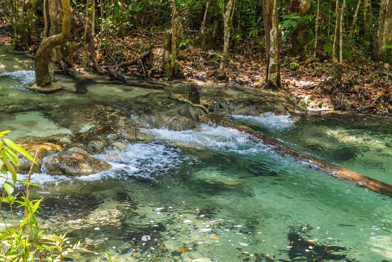 Δάσος μαγγροβίων σε Krabi στην Ταϊλάνδη στοκ φωτογραφία
