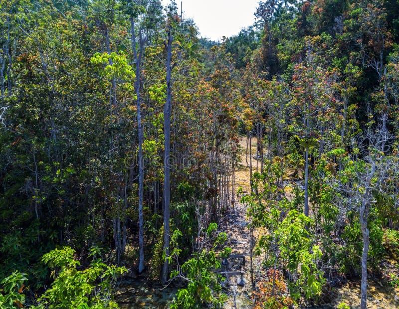 Δάσος μαγγροβίων σε Krabi στην Ταϊλάνδη στοκ φωτογραφία με δικαίωμα ελεύθερης χρήσης