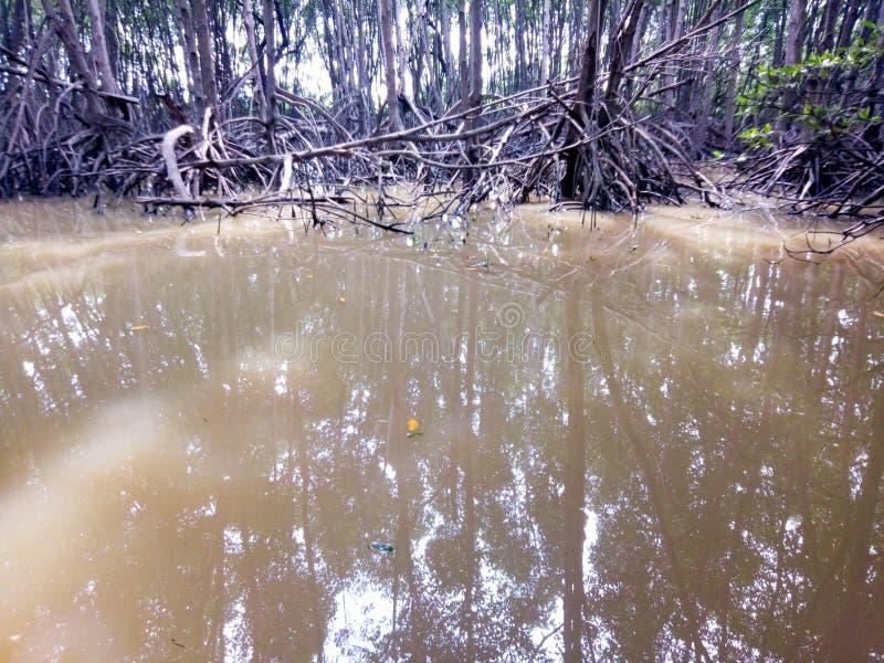 Δάσος μαγγροβίων στον υγρότοπο φύσης στοκ φωτογραφίες