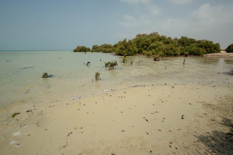 Δάσος μαγγροβίων στο αβλαβές νησί Farasan στην επαρχία Jizan, Σαουδική Αραβία στοκ εικόνες με δικαίωμα ελεύθερης χρήσης