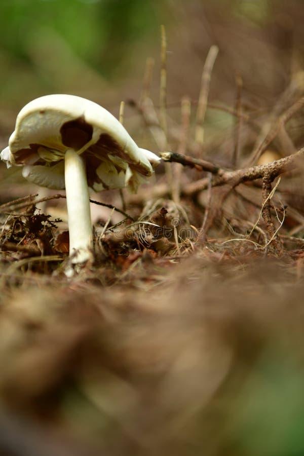 Δάσος, μανιτάρια, απορρίματα, δέρας, κώνοι, άσπρος μύκητας, υπόβαθρο στοκ φωτογραφία με δικαίωμα ελεύθερης χρήσης