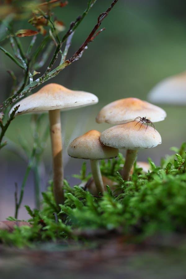 δάσος μανιταριών στοκ εικόνες