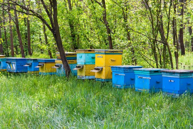 δάσος μελισσουργείων στοκ φωτογραφία