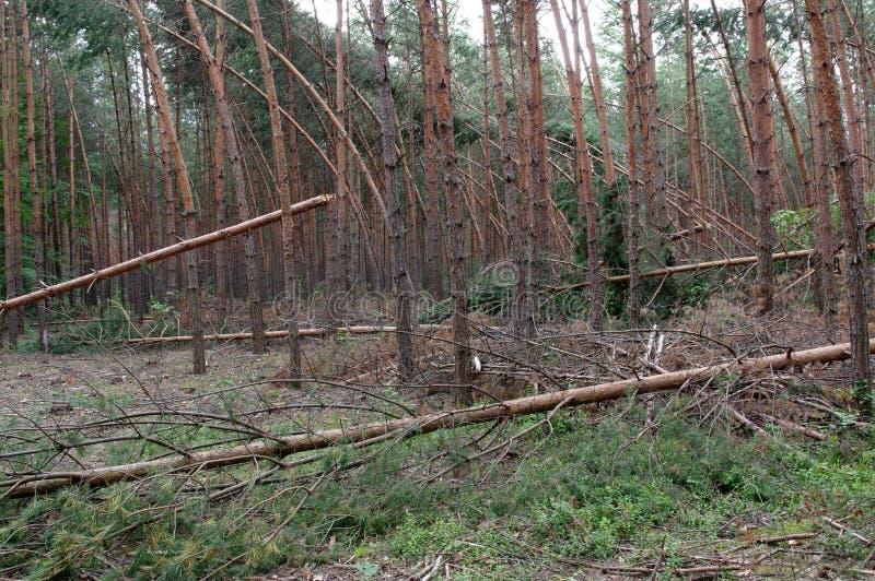 Δάσος μετά από τη θύελλα στοκ φωτογραφίες με δικαίωμα ελεύθερης χρήσης