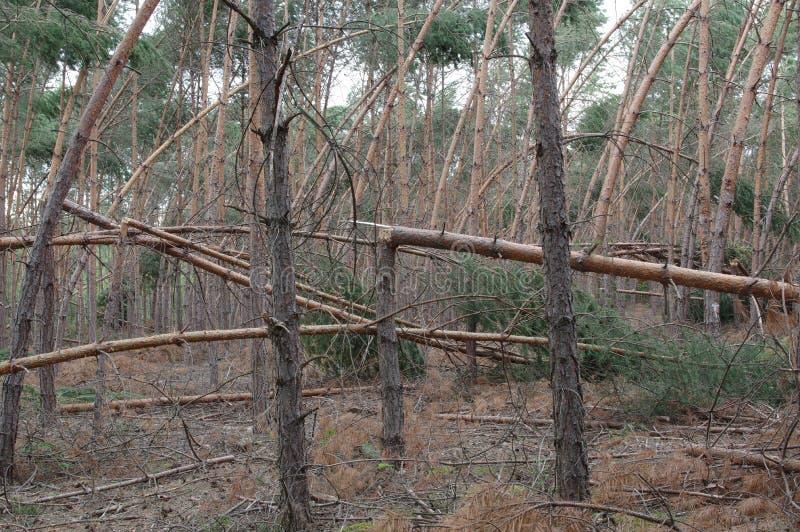 Δάσος μετά από τη θύελλα στοκ εικόνες