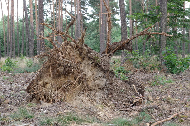 Δάσος μετά από τη θύελλα στοκ εικόνες με δικαίωμα ελεύθερης χρήσης