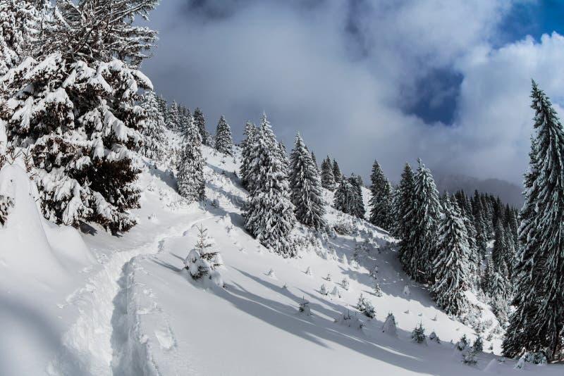 Δάσος με τα πεύκα το χειμώνα στοκ φωτογραφία