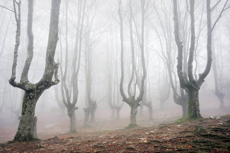 Δάσος με τα τρομακτικά δέντρα στοκ εικόνες