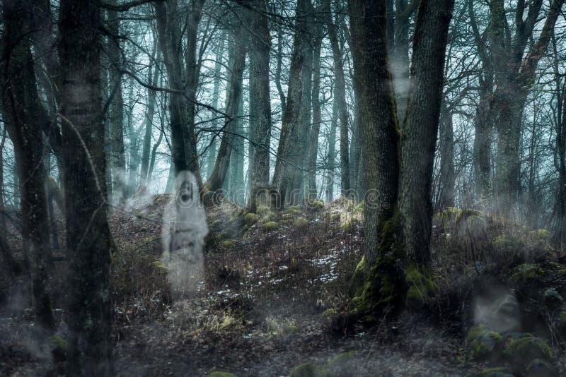 Δάσος με τα φαντάσματα στοκ φωτογραφία