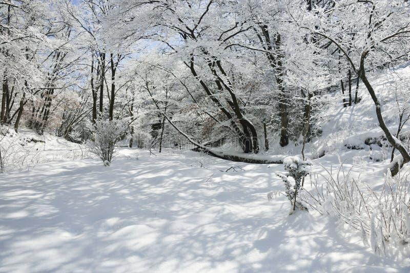 Δάσος με το χιόνι στοκ εικόνες
