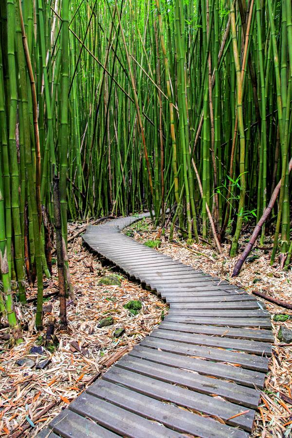 Δάσος μπαμπού κατά μήκος του ίχνους Pipiwai σε Maui που μπορεί να βρεθεί κοντά στο δρόμο στη Hana στοκ φωτογραφία με δικαίωμα ελεύθερης χρήσης