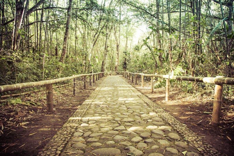 Δάσος μπαμπού με το δρόμο πετρών στοκ φωτογραφίες με δικαίωμα ελεύθερης χρήσης