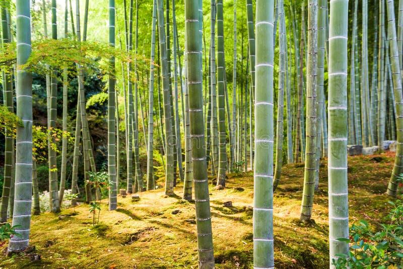 Δάσος μπαμπού του Κιότο στοκ φωτογραφία με δικαίωμα ελεύθερης χρήσης