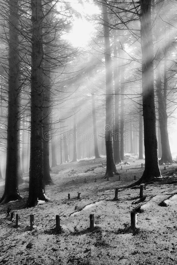 δάσος μυστικό στοκ εικόνα