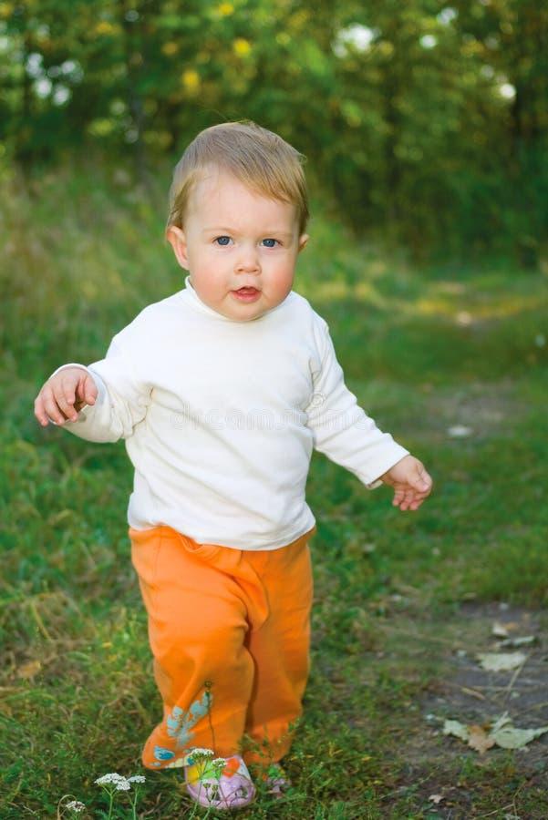 δάσος μωρών στοκ εικόνες