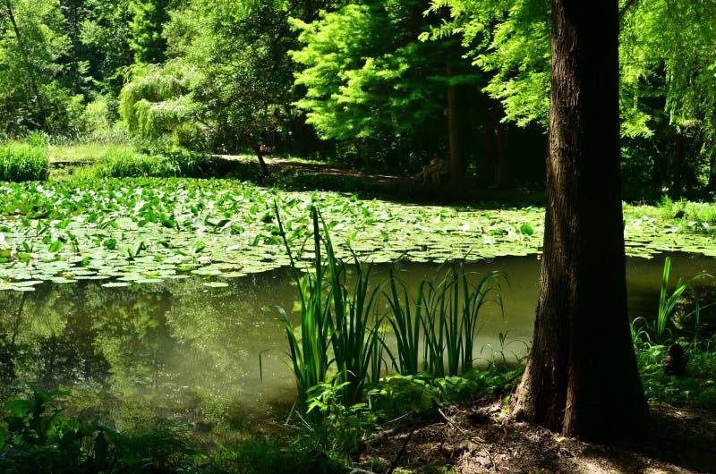 Δάσος, νερό λιμνών, σκιά, καλοκαίρι στοκ φωτογραφία