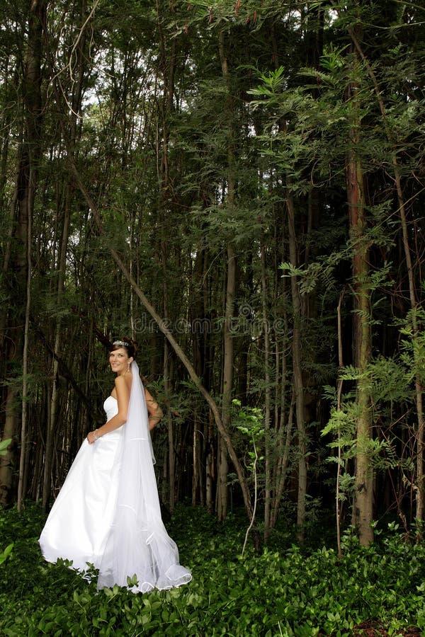 δάσος νυφών στοκ φωτογραφίες με δικαίωμα ελεύθερης χρήσης