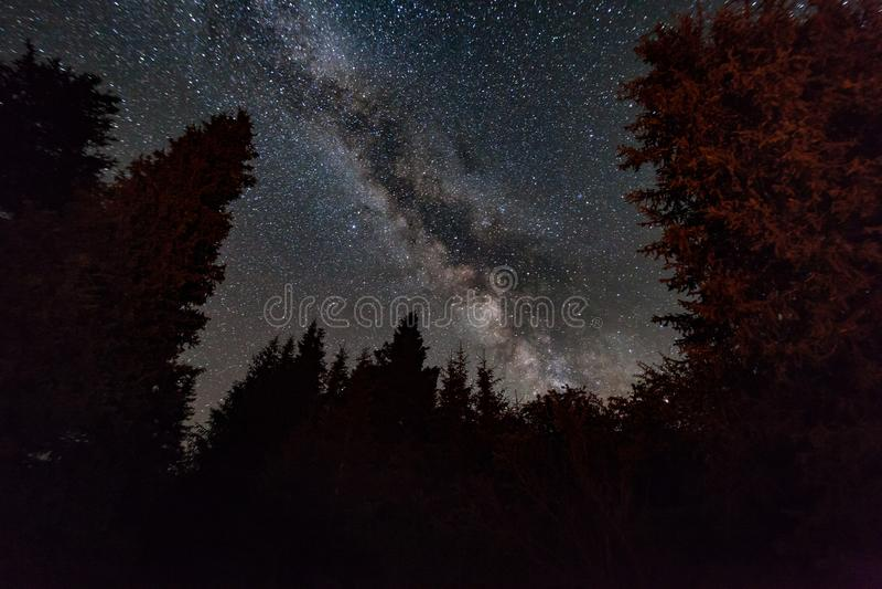 Δάσος νύχτας κάτω από τον έναστρο ουρανό καλυμμένα δέντρα ιστορίας τοπίων νεράιδων hoarfrost στοκ εικόνες