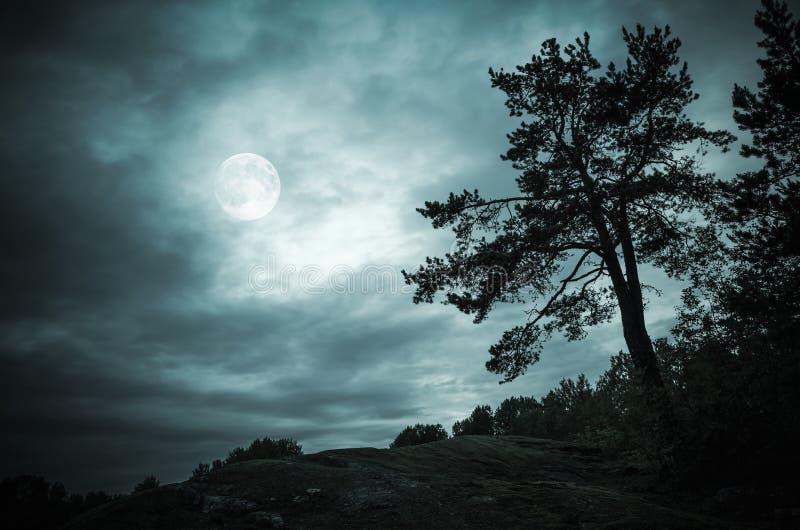 Δάσος νύχτας κάτω από τον ουρανό με τη πανσέληνο στοκ εικόνα με δικαίωμα ελεύθερης χρήσης