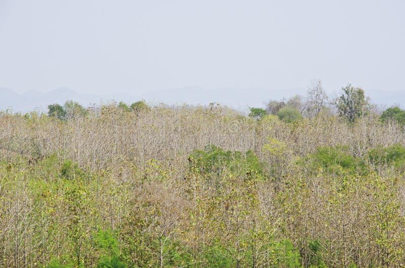 Δάσος οκτώ στοκ εικόνες