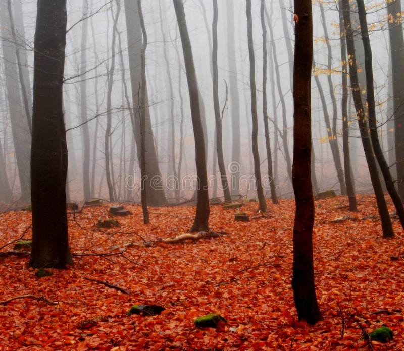 δάσος ομίχλης στοκ φωτογραφίες