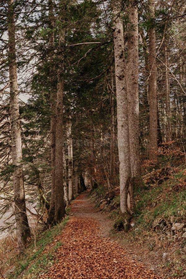 Δάσος οξιών στο δάσος φθινοπώρου timebeech στο χρόνο φθινοπώρου στοκ εικόνες