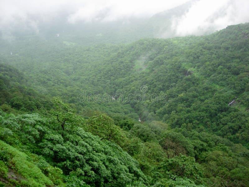 δάσος πέρα από τα σύννεφα βροχής στοκ εικόνα με δικαίωμα ελεύθερης χρήσης