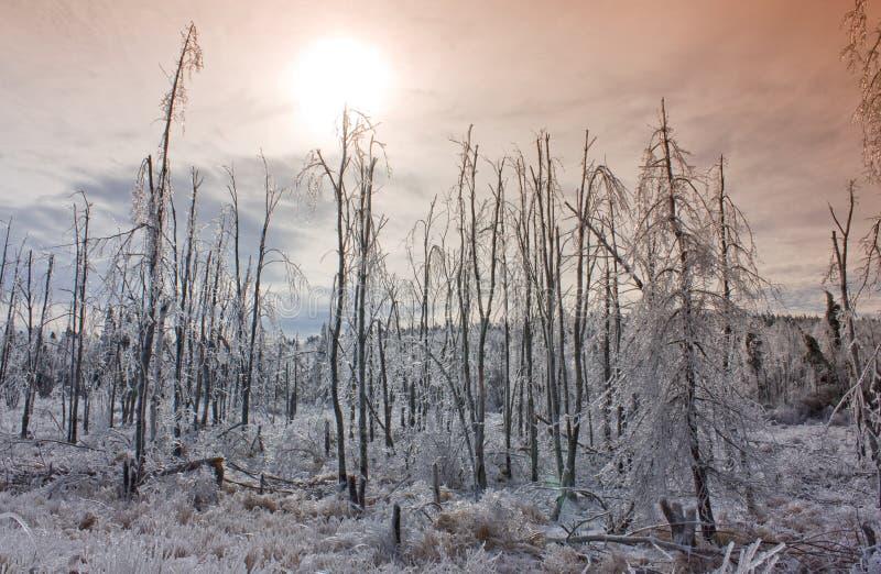 δάσος πέρα από το ηλιοβασί&l στοκ εικόνες