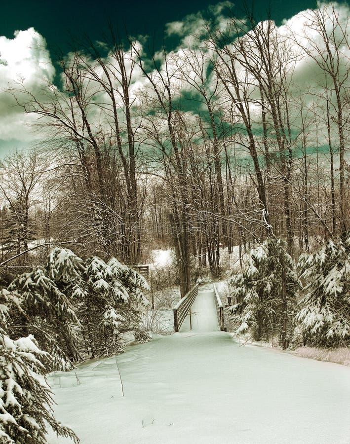 δάσος παγωμένο στοκ εικόνα