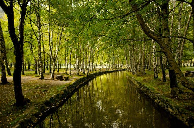 Δάσος παραδείσου στοκ φωτογραφία με δικαίωμα ελεύθερης χρήσης