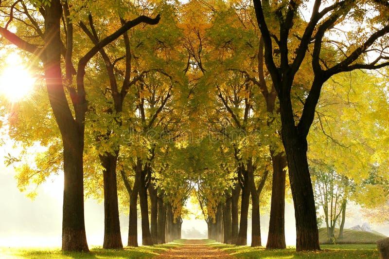 δάσος παραμυθιού στοκ εικόνες με δικαίωμα ελεύθερης χρήσης