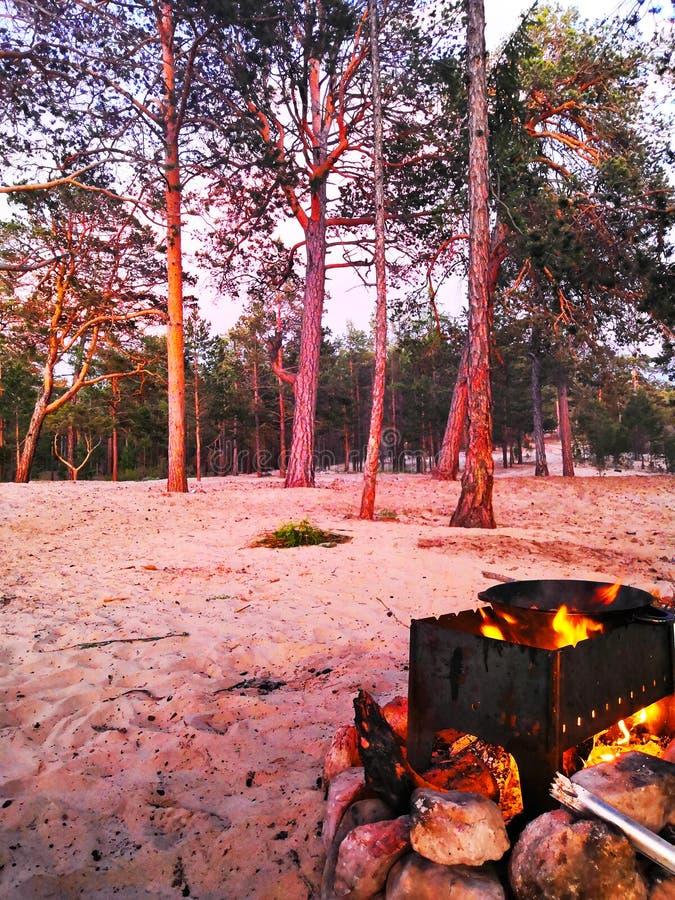 Δάσος πεύκων αναμμένο από το ηλιοβασίλεμα, σχάρα με ένα καζάνι στην πυρκαγιά στοκ φωτογραφία με δικαίωμα ελεύθερης χρήσης