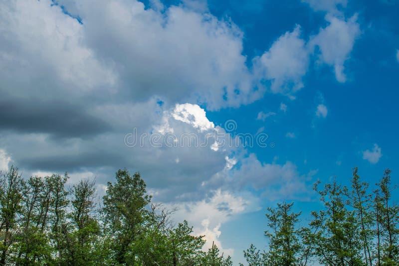 Δάσος πεύκων, βλάστηση στη Ρωσία στην περιοχή του Ροστόφ Τα FIR και δέντρα στη θερμή εποχή, πέρα από τον ουρανό με τα σύννεφα, το στοκ φωτογραφία με δικαίωμα ελεύθερης χρήσης