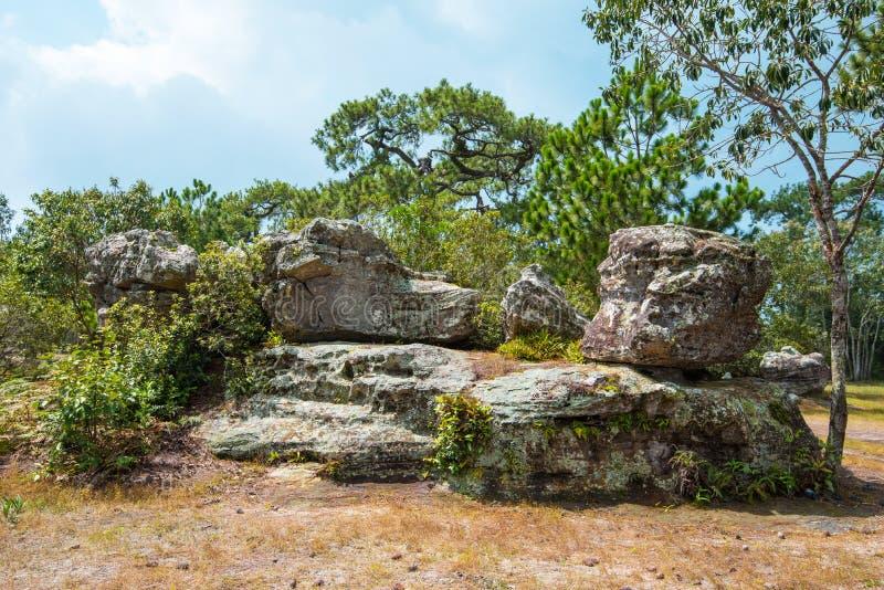 Δάσος πεύκων βράχου στοκ φωτογραφίες