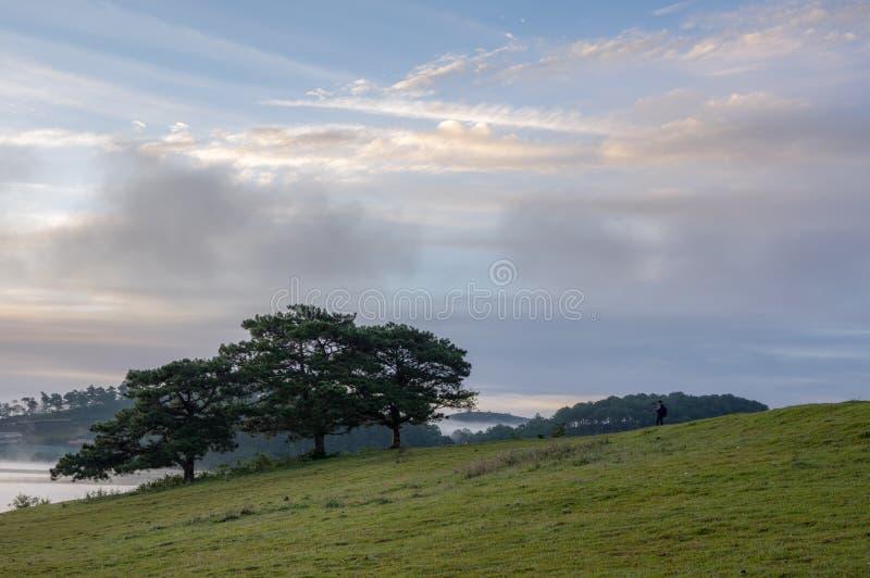 Δάσος πεύκων και υπόβαθρο μπλε ουρανού με το πράσινο λιβάδι, λιβάδι στοκ εικόνες