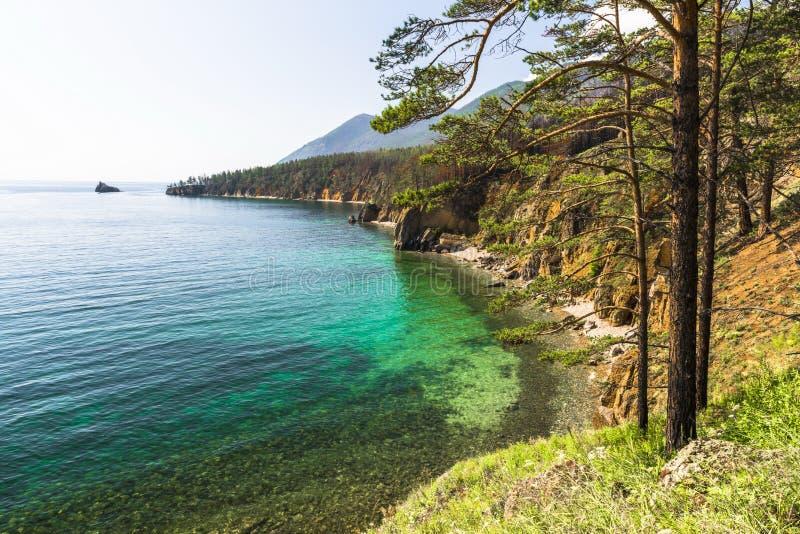Δάσος πεύκων στην ακτή της λίμνης Baikal στοκ εικόνα με δικαίωμα ελεύθερης χρήσης