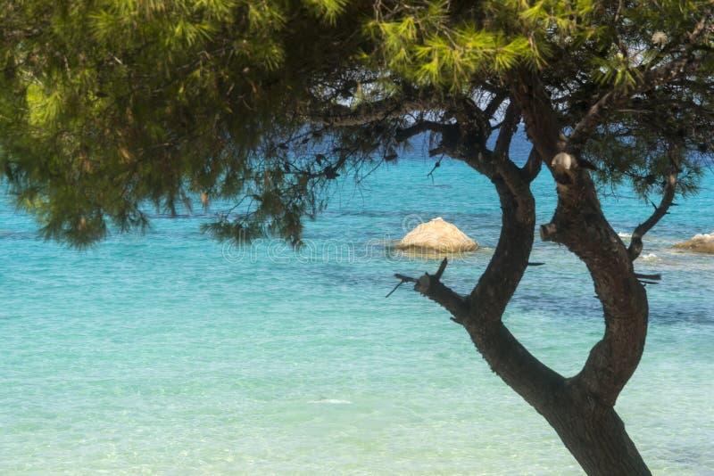 Δάσος πεύκων στην παραλία το καλοκαίρι στοκ εικόνες