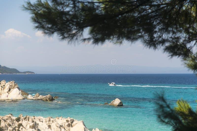 Δάσος πεύκων στην παραλία το καλοκαίρι στοκ φωτογραφία με δικαίωμα ελεύθερης χρήσης