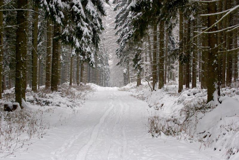 Δάσος πεύκων το χειμώνα στοκ εικόνα με δικαίωμα ελεύθερης χρήσης