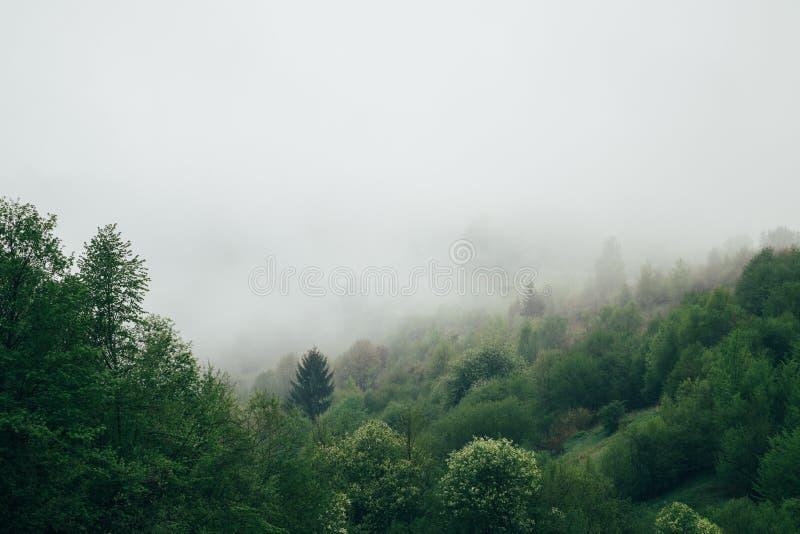 Δάσος που καλύπτεται με μια ομίχλη νωρίς το πρωί Όμορφο τοπίο βουνών φύσης Καρπάθια βουνά, Ουκρανία, Ευρώπη στοκ φωτογραφίες με δικαίωμα ελεύθερης χρήσης