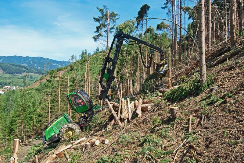 Δάσος που καταγράφεται κάτω στοκ φωτογραφία με δικαίωμα ελεύθερης χρήσης
