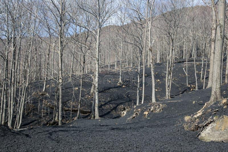 Δάσος που καλύπτεται με την ηφαιστειακή πέτρα στοκ εικόνα