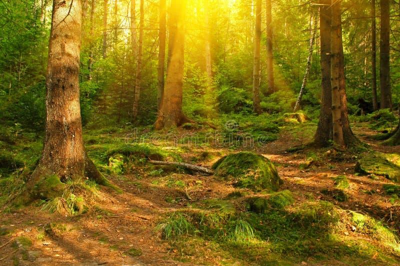 δάσος πράσινο στοκ φωτογραφίες