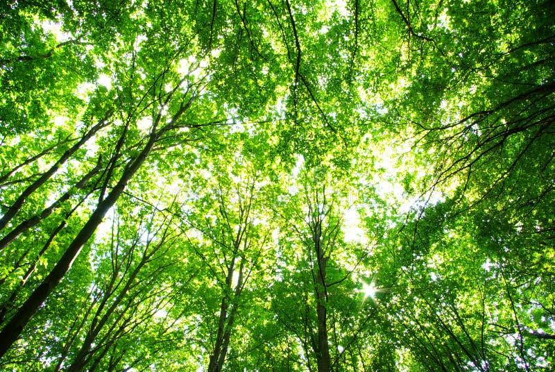 δάσος πράσινο στοκ φωτογραφία με δικαίωμα ελεύθερης χρήσης