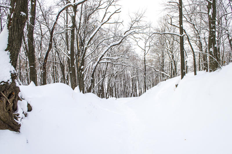 Δάσος πρωινού στοκ εικόνες