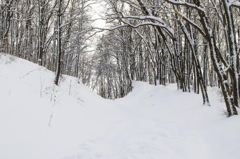 Δάσος πρωινού στοκ εικόνα με δικαίωμα ελεύθερης χρήσης