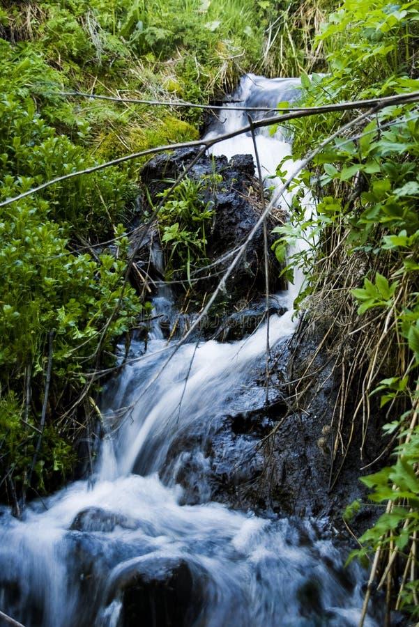 Download δάσος πτώσεων στοκ εικόνες. εικόνα από υγρό, ροή, χλόη - 13176896