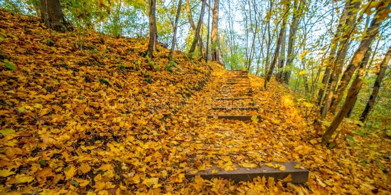Δάσος πτώσης, σκαλοπάτια ιχνών στοκ φωτογραφίες με δικαίωμα ελεύθερης χρήσης